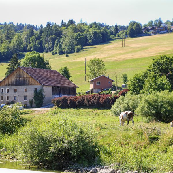ferme pays Horloger rivière Doubs vaches Montbéliardes Pays Horloger
