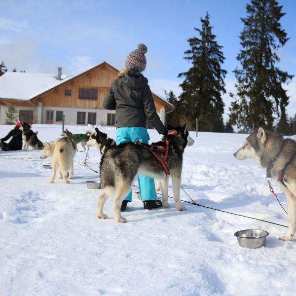 idées cadeaux pour prendre l'air chiens de traineaux pays-horloger- doubs-jura
