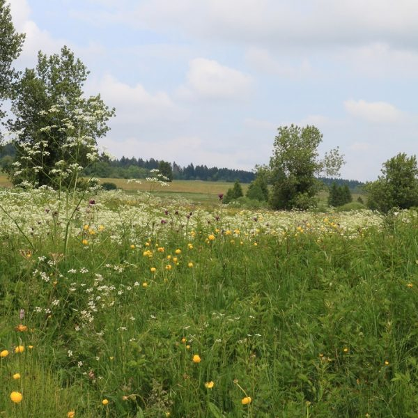 tourbieres etang noel cerneux bizot pays horloger doubs jura prairies fleurs flore