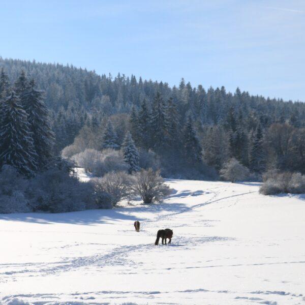 hiver neige paysage cheval pays horloger haut doub sjura
