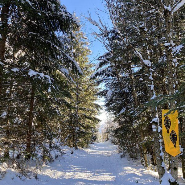 hiver neige raquettes top balades pays horloger