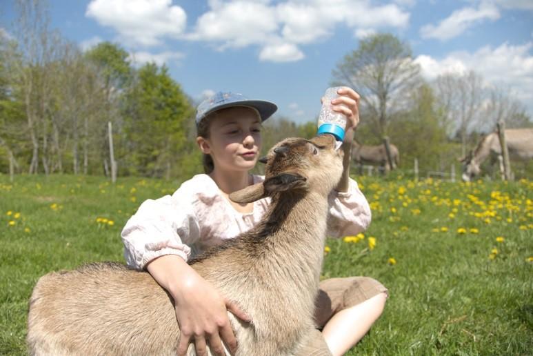 ferme chèvre nourrir visite enfants